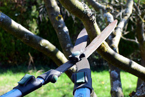 Pruning Shears, Hedge Trimmer