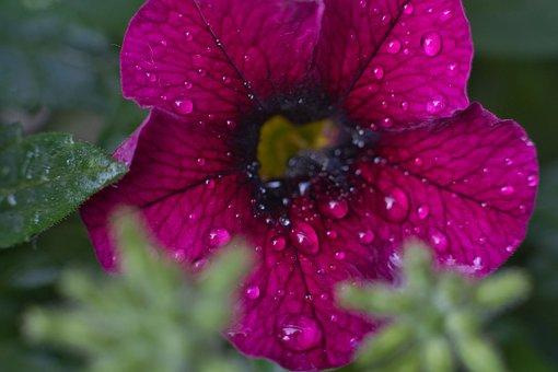 Blossom, Bloom, Wet, Rain, Raindrop, Beauty, Nature