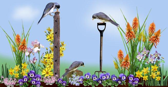 Garden, Scene, Flowers, Birds, Noisy Miners, Nature