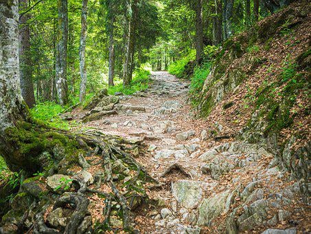 Trail, Steinig, Black Forest