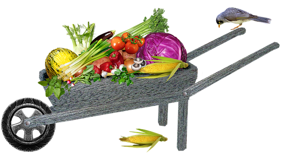 Garden, Produce, Harvest, Wheelbarrow, Vegetables, Food