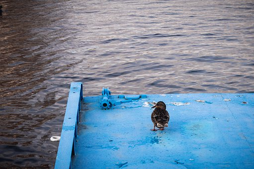 Duck, On The Shore, Nature, Water, Lake, Bird, Animals
