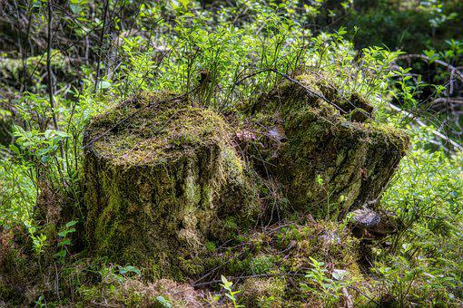 Tree Root, Tree Stump, Old, Break Up, Moss, Weave