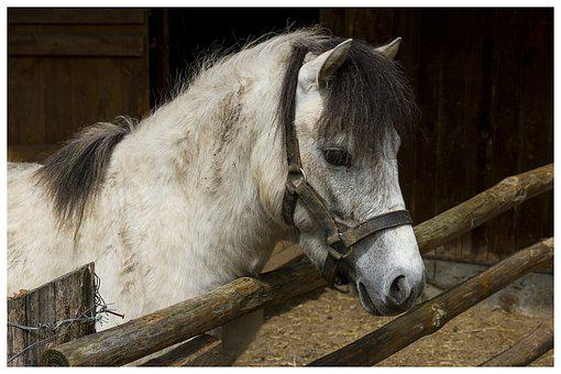 The Horse, Animal, Nice, Horse, Mammal, Open Air Museum