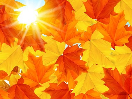 Thanksgiving, Autumn, Maple, Leaf, Sun