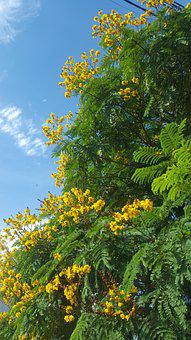 Nature, Yellow Flowers, Clear Blue Sky