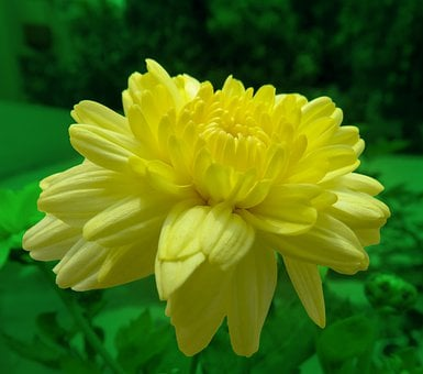 That's The Nature Power, Yellow Nature, Cute Yellow