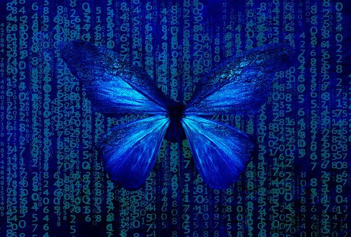 Butterfly, Vibrant, Blue, Bright, Nature, Variety