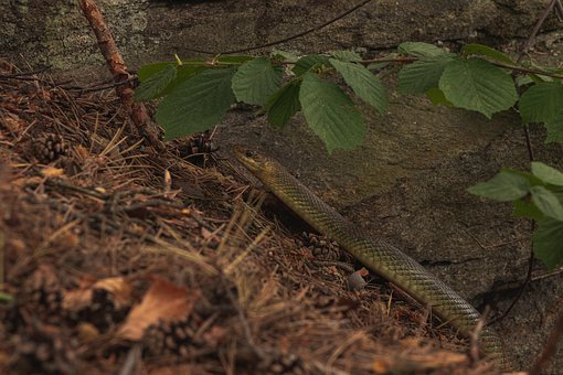 Snake, Rock, Crawl, Nature, Animal World, Reptile