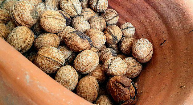 Walnut, Terry, Casserole, Fresh