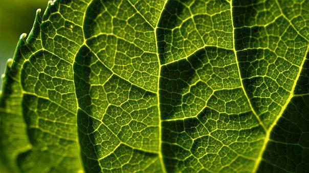 Leaf, Green, Close Up, Sunlight, Pattern
