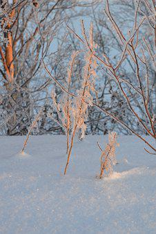 Frost, Winter, Cold, Nature, Crystals, Tree, Landscape