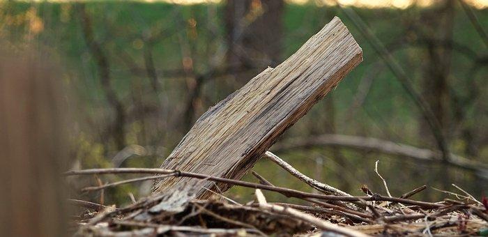 Wood, Wedge, Forest, Firewood, Wedges, Wood Chop, Split