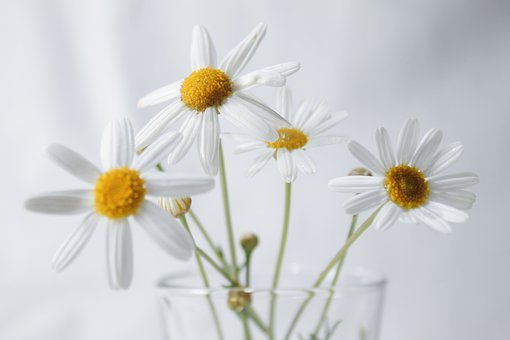 White Flowers, Beautiful Flowers, A Bouquet Of Flowers