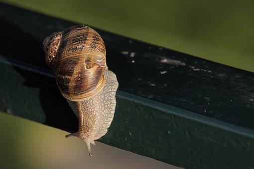Snail, Animal, Shell, Slimy