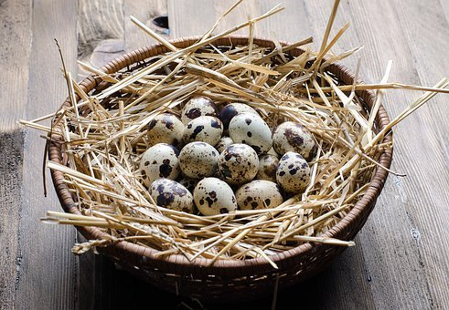 Quail, Egg, Nest, Eggs, Basket, Healthy, Cholesterol