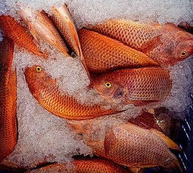 Fish, Mullet, Ice, Market, Fish Shop