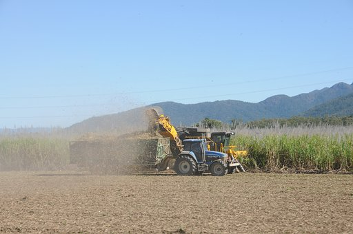Sugar, Cane, Harvest, Sugarcane, Food, Plants, Tractor