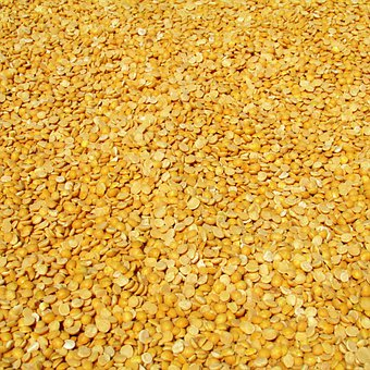 Peas, Dharwad, India, Crop, Harvested, Agriculture