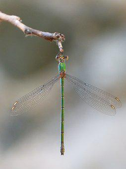 Dragonfly, Green Dragonfly, Winged Insect, Iridescent