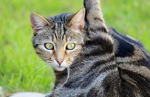 Cat, Pet, Attention, Clean, Out, Fur, Leg, Paw, Yoga