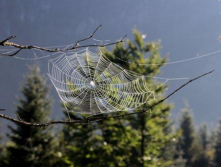 Dream Catcher, Spider, Cobweb, Nature, Tree, Forest