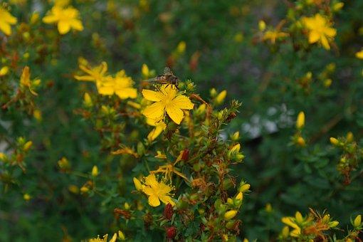 Wort, Flower, Blossom, Bloom, Yellow