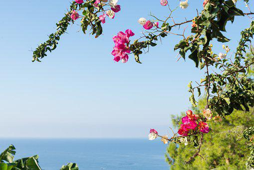 Summer, Blossom, Flowers, Nature, Sea, Sky, Blue, Water