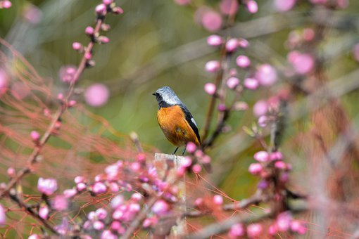 Animal, Forest, Plant, Wood, The Peach Tree, Flowers