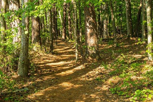 Shady Forest, Sunbeams, Forest Trail, Idyll, Mood