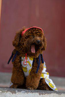 Dog, Pet, Animal, Cute, Love, Funny, Happy, Friends