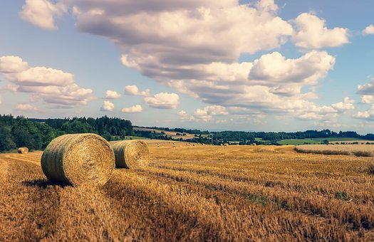 Hay, Field, Harvested, Agriculture, Harvest, Straw