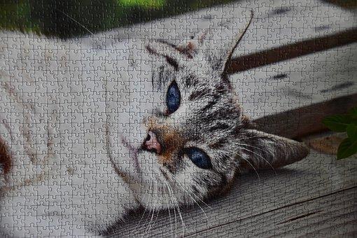Cat Puzzle, Puzzle, Puzzle Of Thousand Pieces