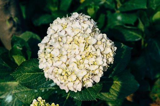 Flower, Blossom, Bloom, White, Spring