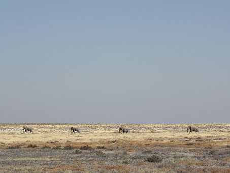 Namibia, Elephant, Etosha, Wide, Horizon, Safari