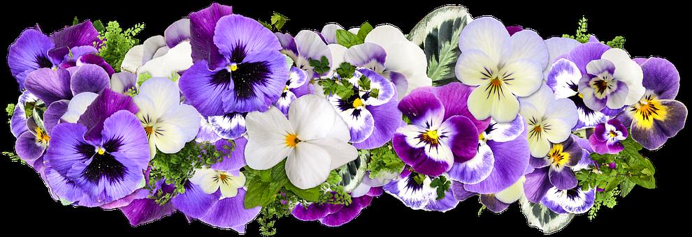 Flowers, Decoration, Line Of Flowers, Decor, Png