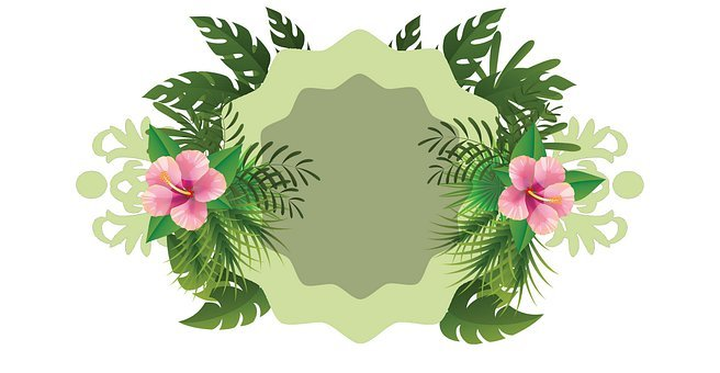 Frame, Background, Foliage, Greenery, Floral, Flowers