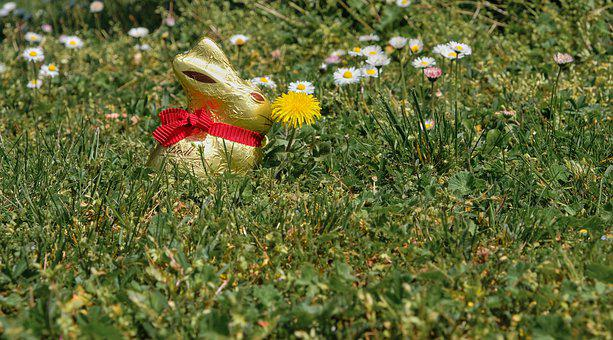 Easter Bunny, Easter, Meadow, Lindt