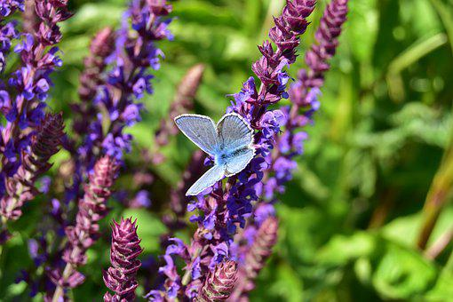 Butterfly From The Rear, Flower, Purple, Violet, Spring