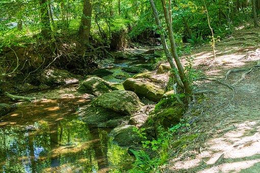 Creek Path, Stream Path, Secret Creek, Nature, Stream