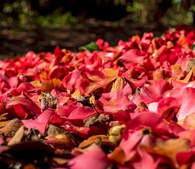 Red, Camellia, Flora, Petals, Spring, Garden