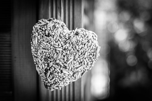 Heart, Bird Seed, In The Free, Garden, Feeding Place