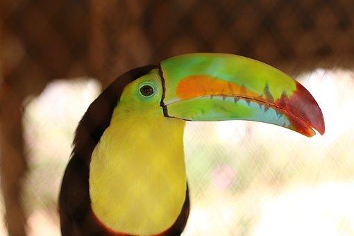 Pajaros, Tucan, Naturaleza, Toucan, Bird, Nature