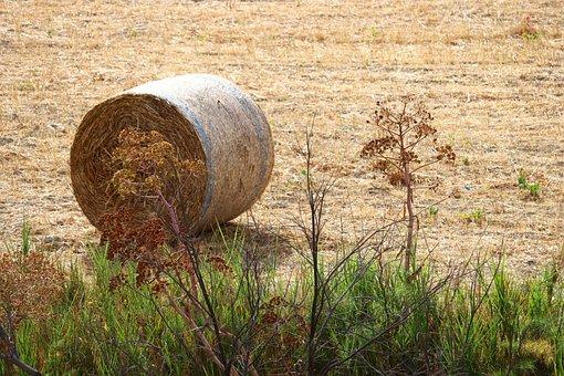 Countryside, Hay, Wheel, Circle, Work, Field