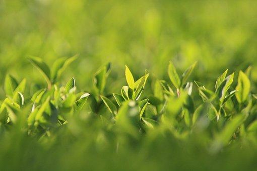 Hedge, Green, Garden, Leaves, Park