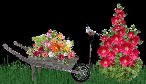 Garden, Scene, Hollyhocks, Wheelbarrow, Plants, Pigeon