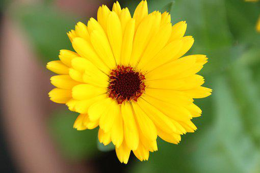 Marigold, Yellow, Blossom, Bloom, Fly, Nature, Garden