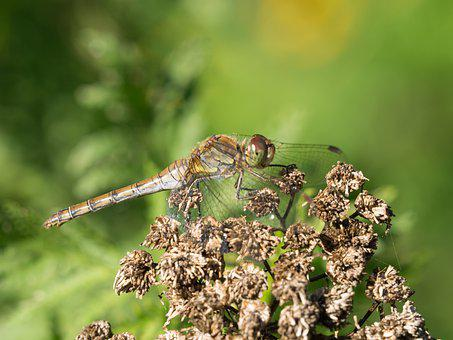 Bug, Forest, Green, Dragonfly