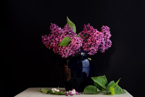 Lilac, Still Life, Purple, Spring, Plant, Nature