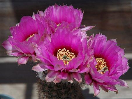 Beautiful Light Pills, Antlers Column, Cactus